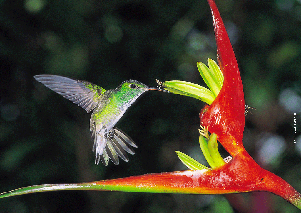 biodiversité-en-foret-amazonienne-lutte-contre-la-deforestation